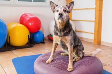 Passive Bewegung / Gerätetherapie
