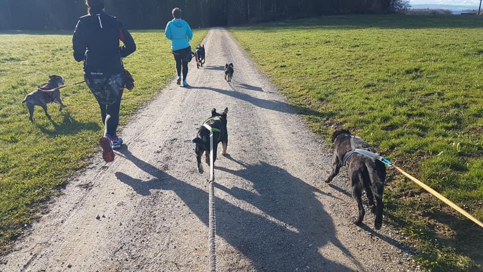 Bewegung für Hund und Mensch